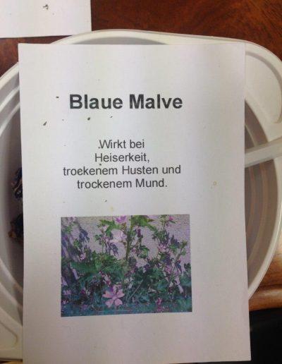 Blaue Malve